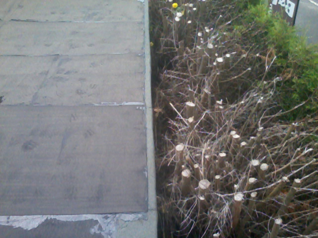 Solar Paint Finish Flat Roof 04